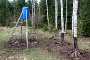 Tjæretræ med god vildsvineaktivitet
